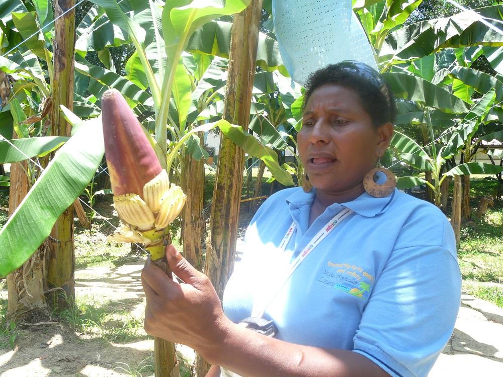 Бананов цвят в плантация в Коста Рика