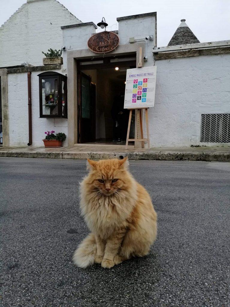 Котката е цар в Алберобело и изобщо в Италия.