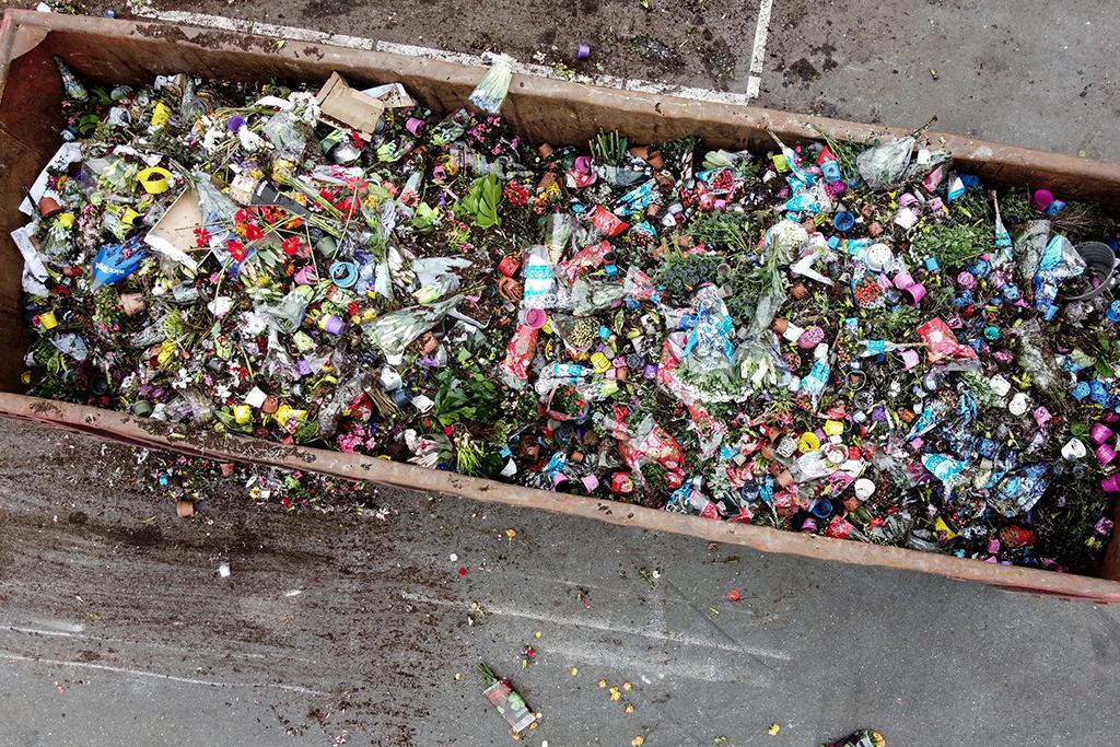 Унищожиха хиляди цветя заради коронавируса в Нидерландия