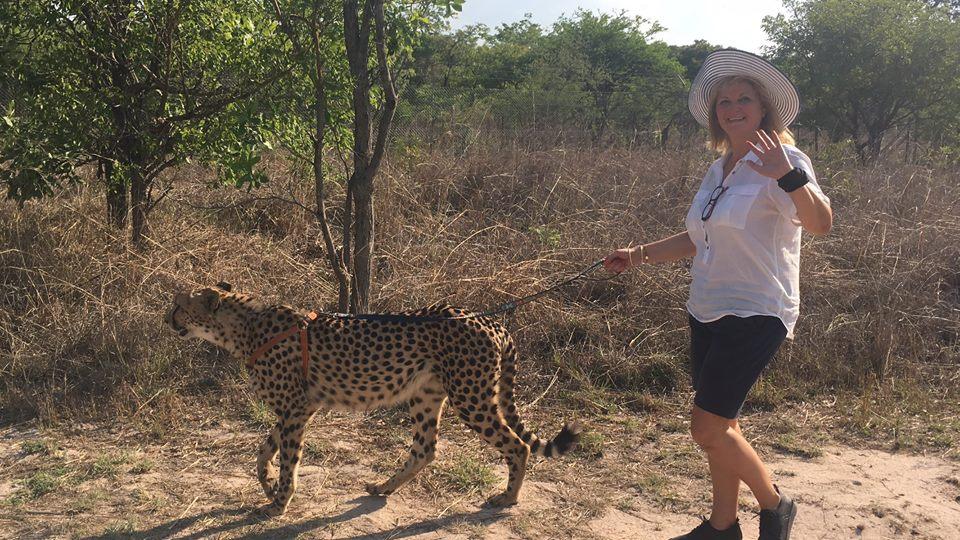 Да водиш гепард на каишка в Замбия